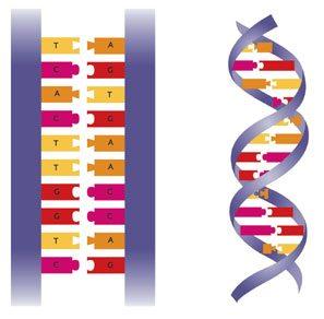 Heredity (Ordinary Level)