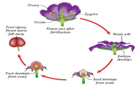 The Structure And Functions Of Flowers