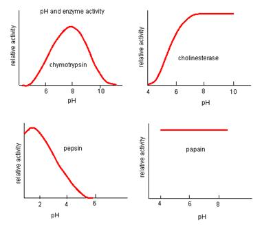 explain how ph and temperature affect enzyme activity