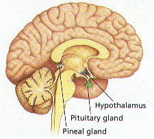 how to make pituitary gland active