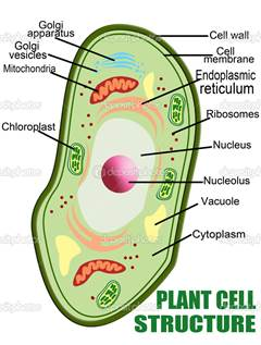 Cell structure all living organisms are made up of cells and new cells are produced when live cells divide the cell is the smallest unit of life in an organism ccuart Choice Image