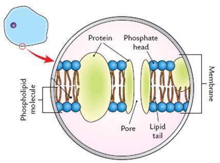 Superb Cell Structure Wiring 101 Mecadwellnesstrialsorg